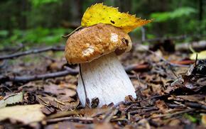 autumn, leaf, white, mushroom
