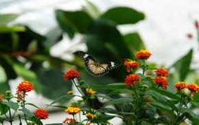macro, flowers, butterfly, photo