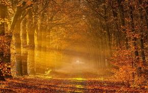 пейзаж, дорога, туман, осень