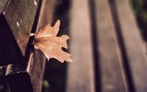 bench, depth of field, leaves, fall