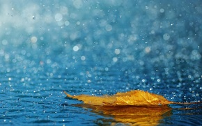 drops, water, rain, leaf, macro, autumn