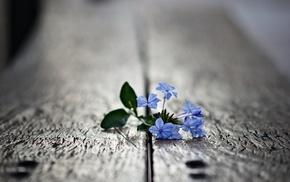flowers, minimalism, photo, board, macro