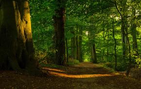 trees, nature, foliage, Sun, light