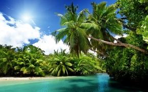 palm trees, sea, nature, tropics, Sun