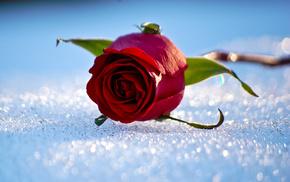 вода, свет, роза, мороз, солнца, зима