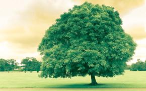 лето, природа, небо, пасмурно, деревья