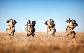 весело, поле, собаки, красиво, прикольно, небо