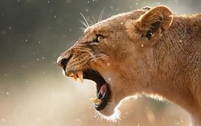 muzzle, predator, eyes, animals, ears