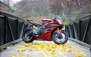 leaves, bridge, autumn, motorcycles