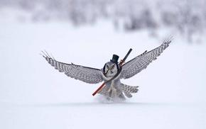 owl, winter, humor, snow