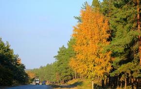 road, leaves, autumn, tree