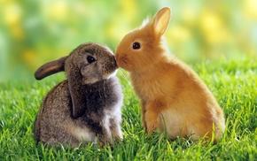animals, rabbits, grass