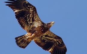 sky, animals, tail, wings