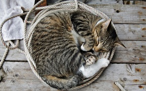 animals, wooden surface, sleeping, cat, ropes