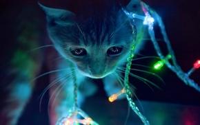 lights, christmas lights, anime, cat, animals