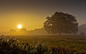 nature, Sun, dawn, tree, morning
