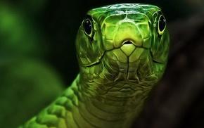 photo, animals, macro, nature, snake