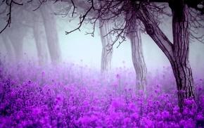 spring, trees, morning, flowers, mist