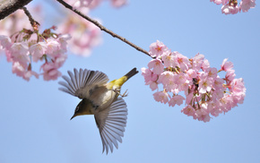 bird, fly, tree, spring, macro