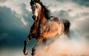 animals, sand, horse, clouds, mustang