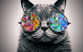 glasses, animals, cat, selective coloring