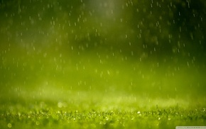 macro, grass, water drops, nature