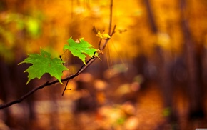 leaves, macro, nature, blurred
