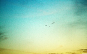 sky, birds, nature