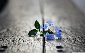 nature, depth of field, flowers, blue flowers, macro, blurred