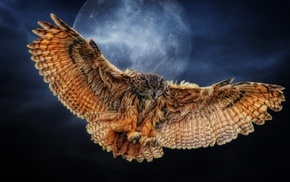 wings, fly, night, nature, moon