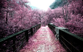 pink, blurred, path, nature, trees