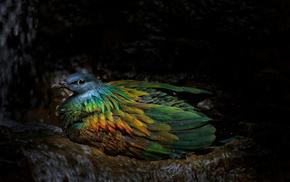 eyes, bird, animals, feathers, rainbow