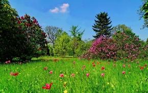 grass, trees, nature, landscape, flowers