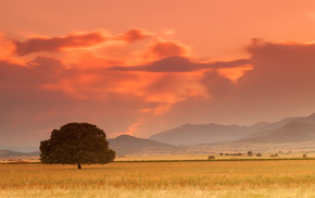дерево, закат, природа, степь, горы