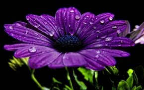 water, flowers, drops, flower, photo