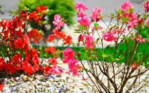 red, pink, flowers, green, grass