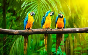 blue, yellow, tropics, birds, palm trees