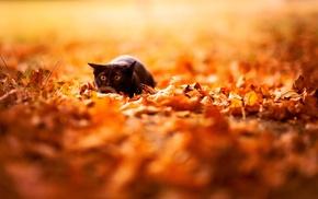 eyes, ears, autumn, muzzle, animals