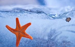 красивые, water, морская звезда, starfish, море, вода