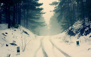 road, nature, winter, forest, twigs