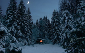 snow, forest, winter, trees, moon