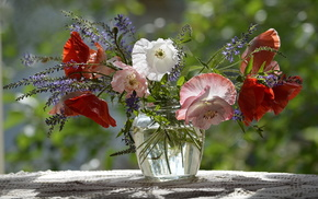 poppies, flowers, vase, still life