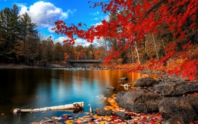fall, river, trees, nature