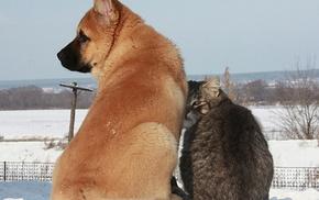 кот, зима, снег, животные, красота, дружба