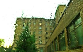 nature, rain, house, fir-tree