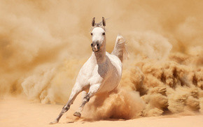 horse, animals, sand, mustang