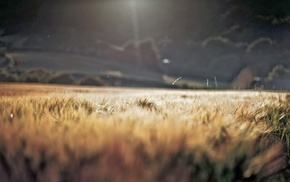 blurred, macro, grass, nature