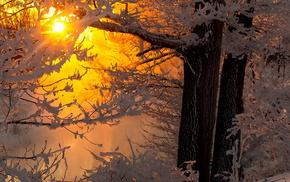 snow, twigs, trees, winter, Sun