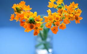 still life, vase, flowers
