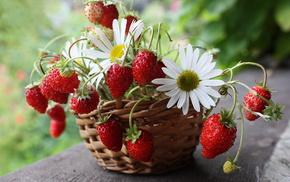 flowers, strawberry, still life, basket